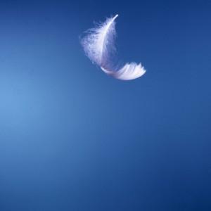 plume légère
