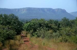 foret-kedougou